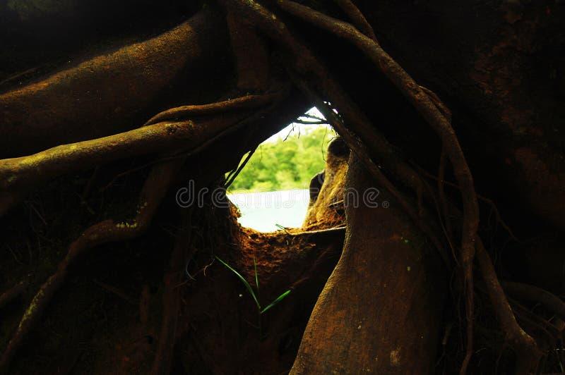 Зеленые лес и озеро избегают в плато Ява Dieng, Индонезии стоковая фотография rf