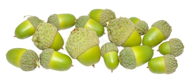 Download Зеленые жолуди дуба стоковое фото. изображение насчитывающей плодоовощ - 33730536