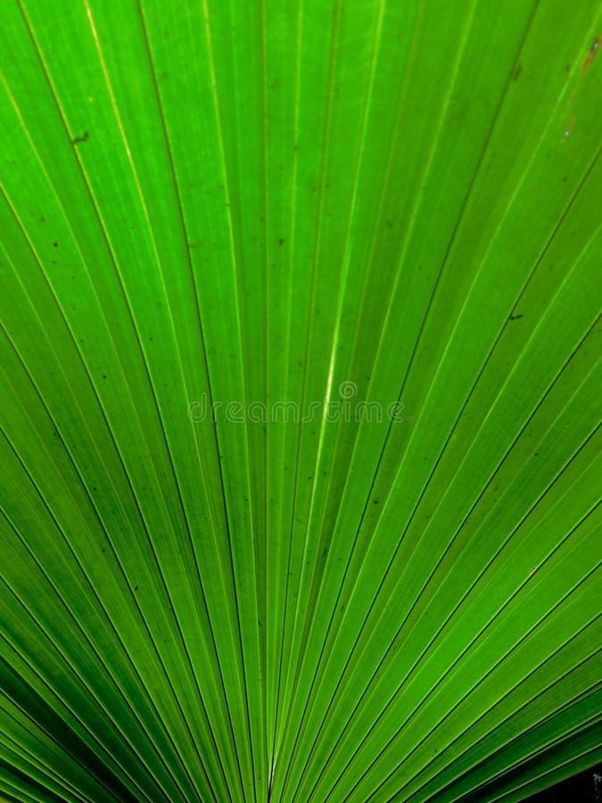 Зеленые заводы семьи ладони лист стоковая фотография