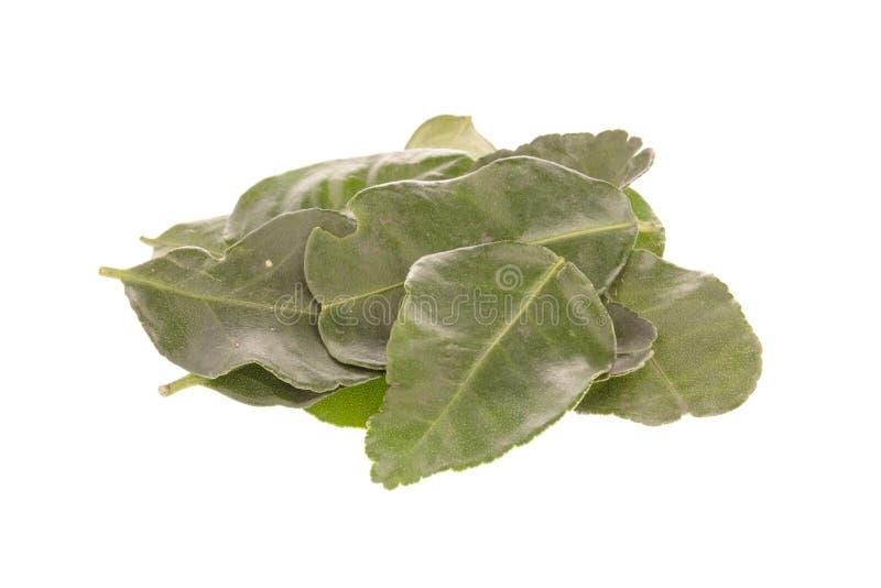 Зеленые листья известки kaffir стоковые фото