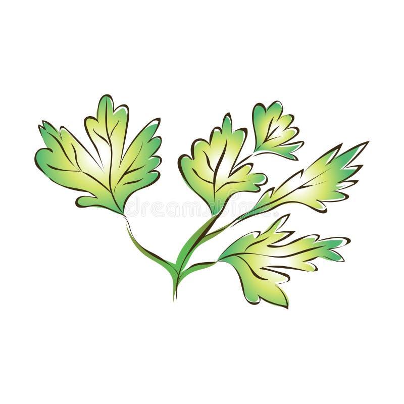 Зеленые листья или сельдерей петрушки Иллюстрация вектора, изолированная на белизне бесплатная иллюстрация