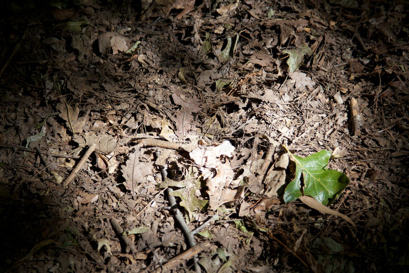 зеленые листья одиночные стоковое изображение rf