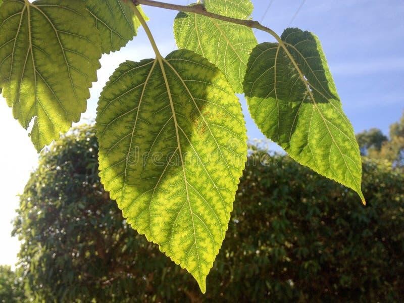 зеленые листья стоковые фото