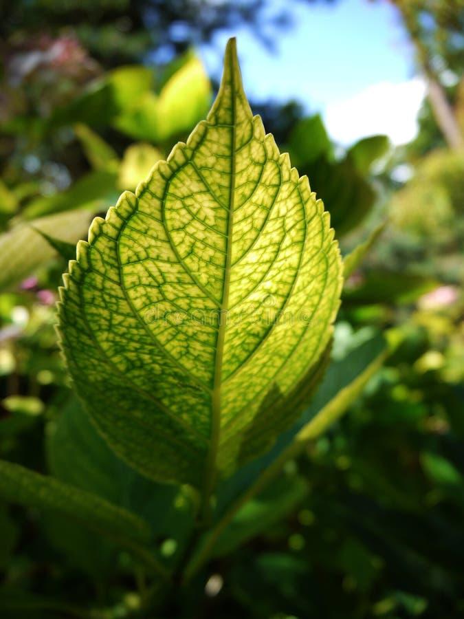 Зеленые лист и немного неба стоковые изображения