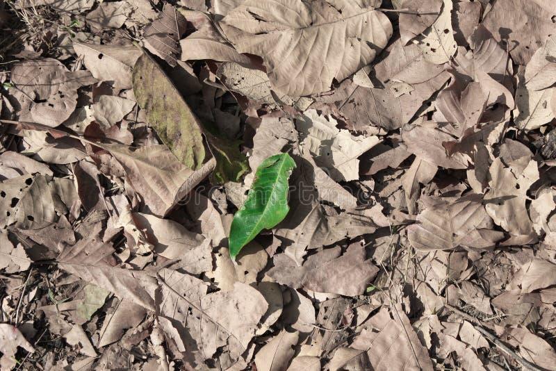 Зеленые лист и сухие лист стоковое изображение