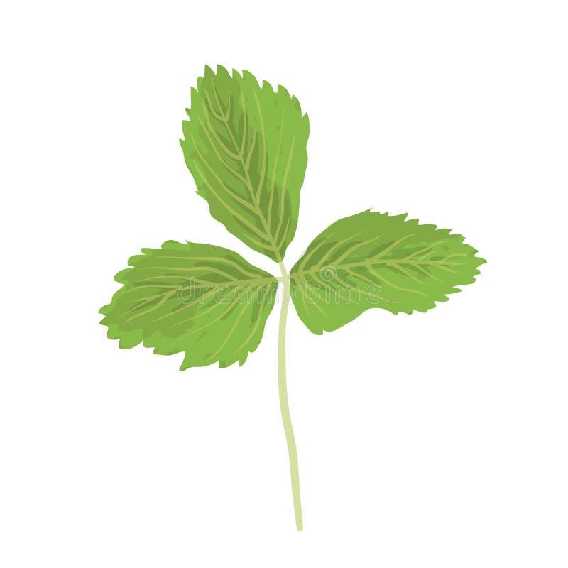 Зеленые лист клубники на белой предпосылке иллюстрация вектора