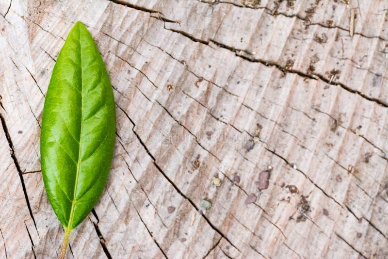 Зеленые лист на древесине стоковое фото rf