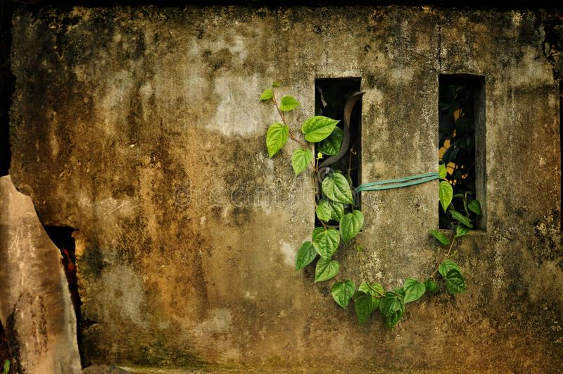 Зеленые лист на стене стоковое фото rf