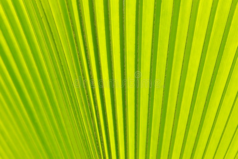 Зеленые лист стоковая фотография rf