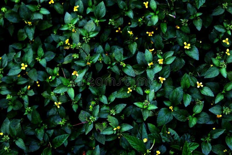 Зеленые и желтые дикие растения стоковые изображения rf