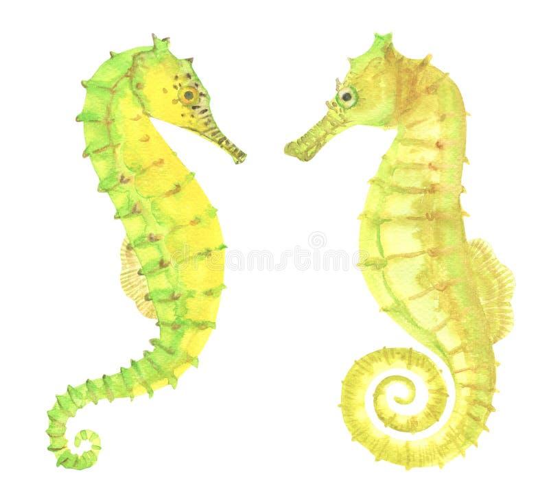 Зеленые и желтые морские коньки акварели иллюстрация вектора