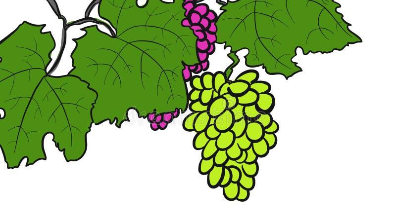 Зеленые и красные виноградины лозы иллюстрация штока