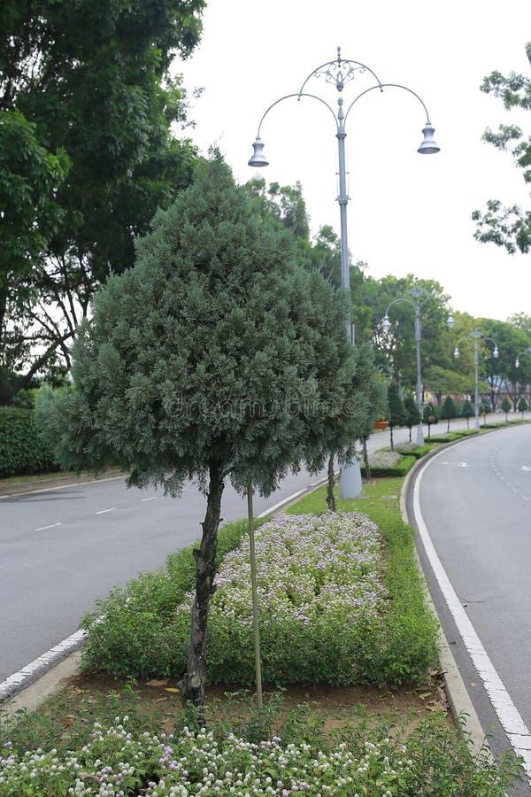 Зеленые красивые сад и цветки стоковое изображение rf