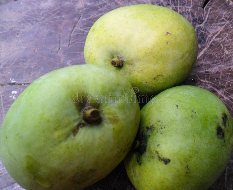 зеленые мангоы стоковое фото