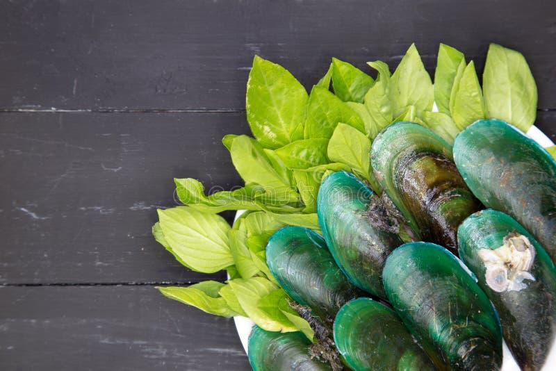 зеленые мидии стоковые изображения