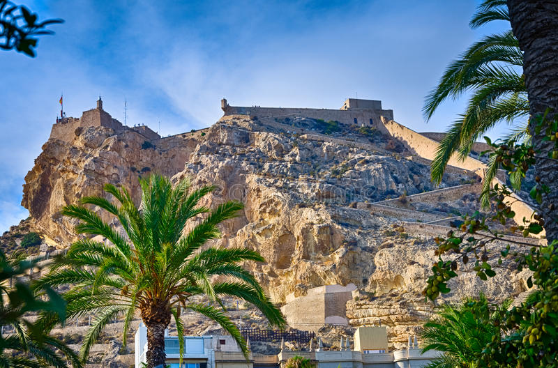 Зеленые пальмы с замком Санта-Барбара Аликанте на предпосылке, Испании стоковое изображение rf