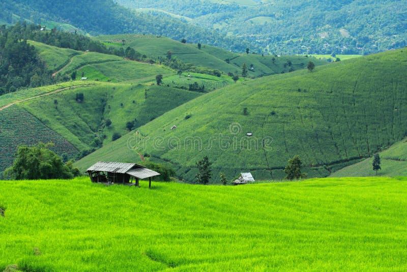 Зеленые поле и гора стоковые изображения