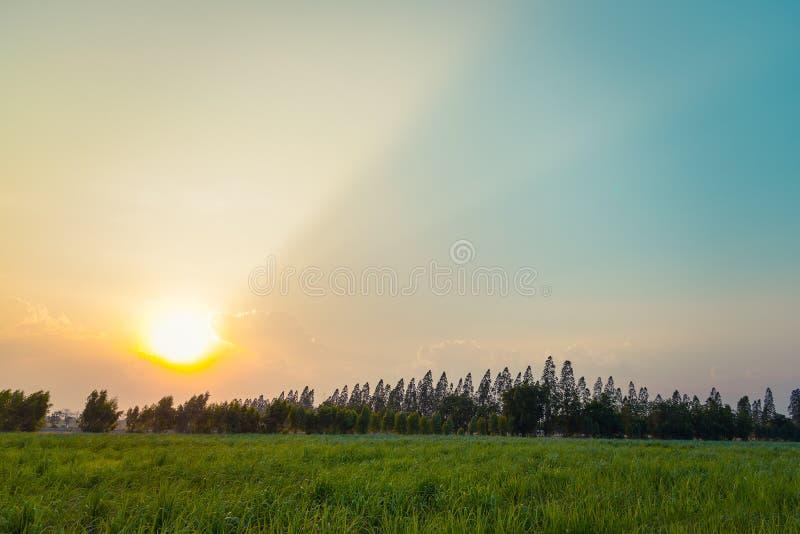 Зеленые поля с красивым светом захода солнца стоковое фото rf