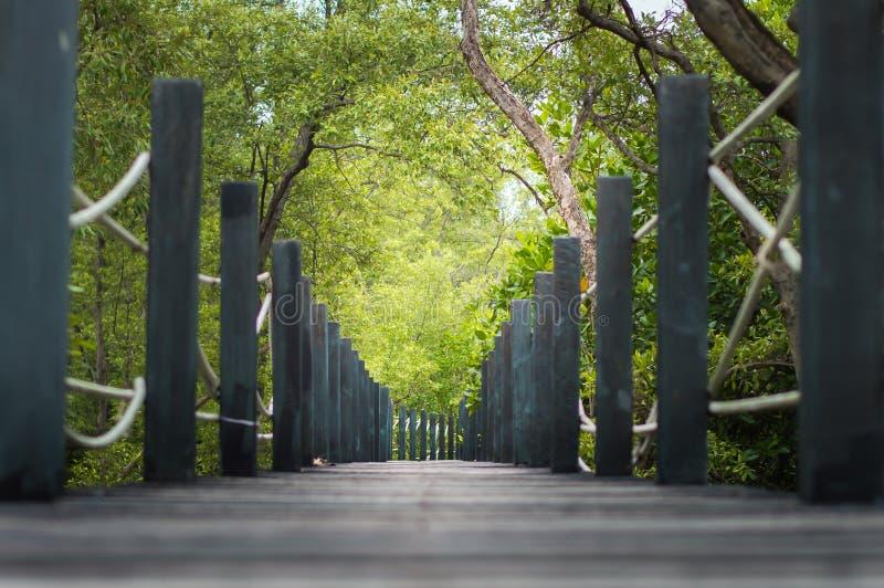 Зеленые пути луга и древесин field природа ландшафта стоковое фото