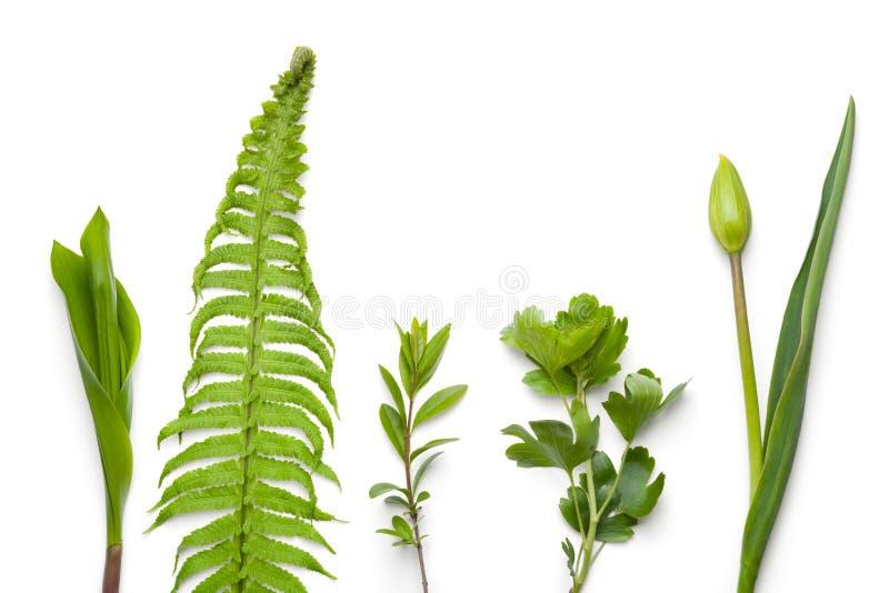 Зеленые растения на белой предпосылке стоковая фотография rf