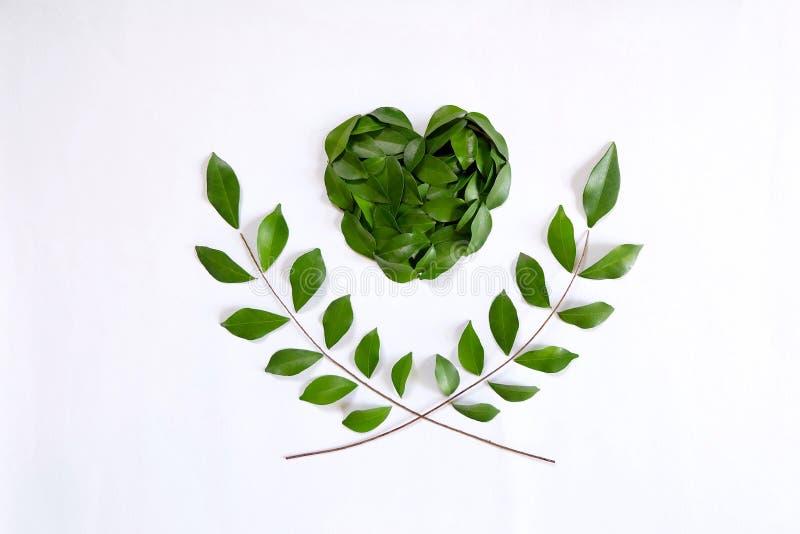 Зеленые сердце и оливковая ветка стоковое изображение
