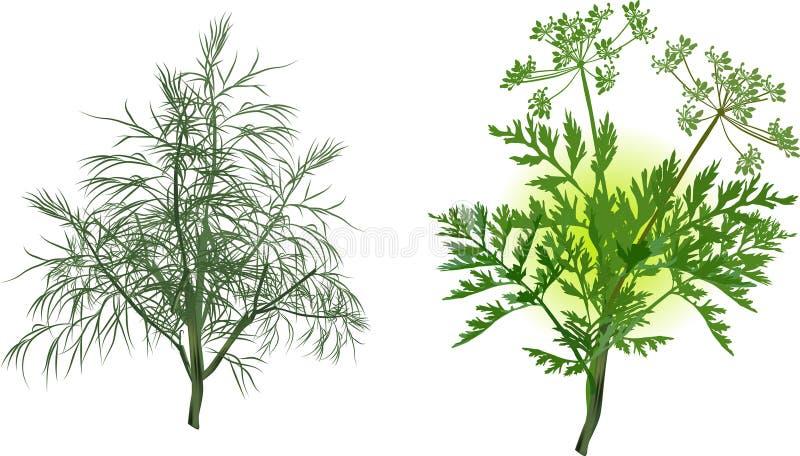 Зеленые сельдерей и укроп на белизне иллюстрация штока