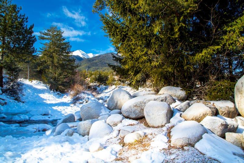 Зеленые сосны и белый пик снега  стоковые фотографии rf