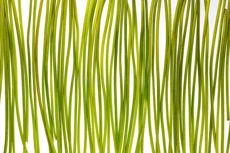 Зеленые стержни стоковые изображения rf
