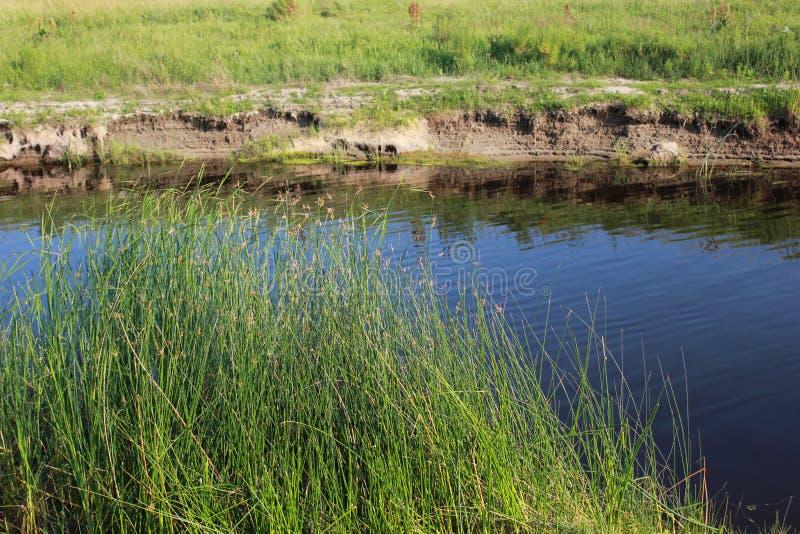 Зеленые тростники близко к озеру 18273 стоковое фото rf