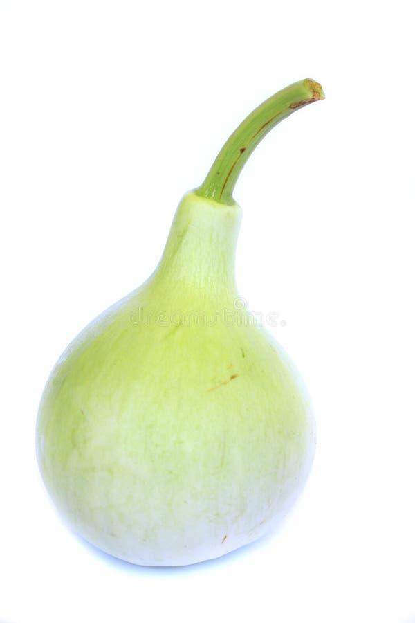 Зеленые тыквы стоковые фото