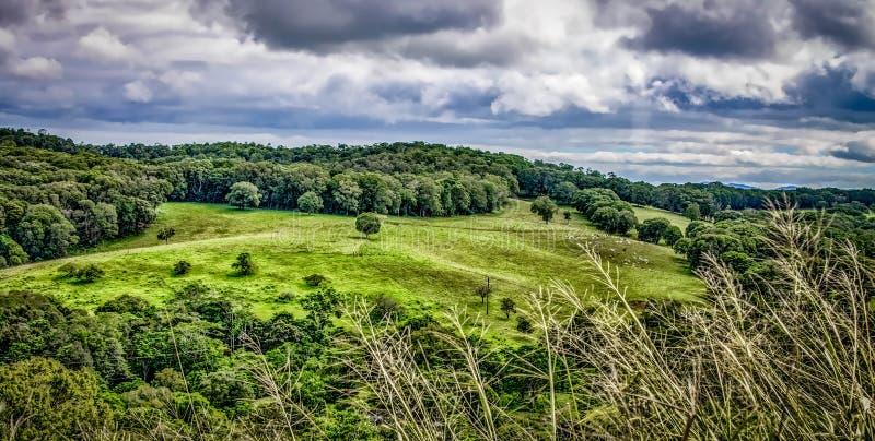 Зеленые луга завальцовки в австралийском ландшафте стоковая фотография rf