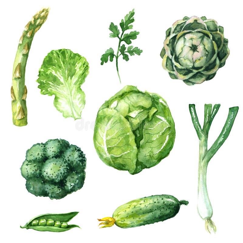 Зеленые установленные овощи бесплатная иллюстрация