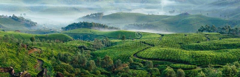 Зеленые холмы плантаций чая в Munnar стоковая фотография