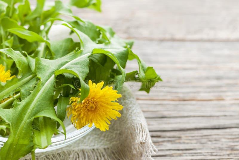 Зеленые цвета и цветки одуванчиков стоковое изображение