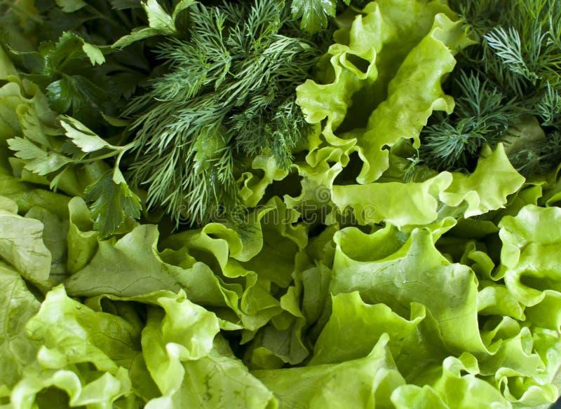 Зеленые цвета от сада стоковые изображения
