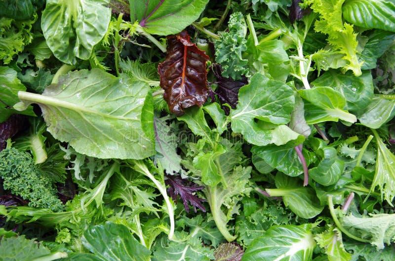 Зеленые цвета поля смешанного салата стоковые фотографии rf