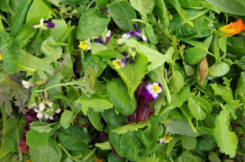 Зеленые цвета салата Mesclun с съестными цветками стоковые фотографии rf