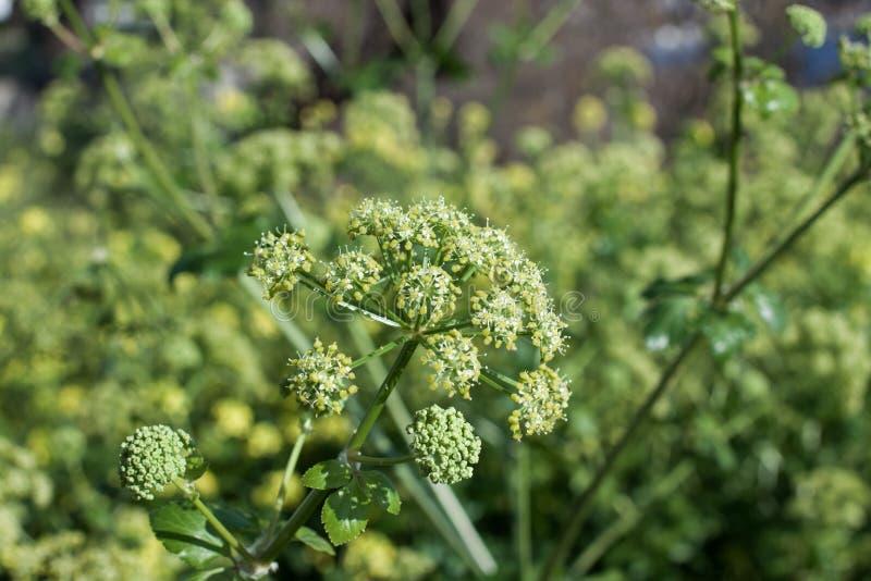 Зеленые цветки стоковые фотографии rf