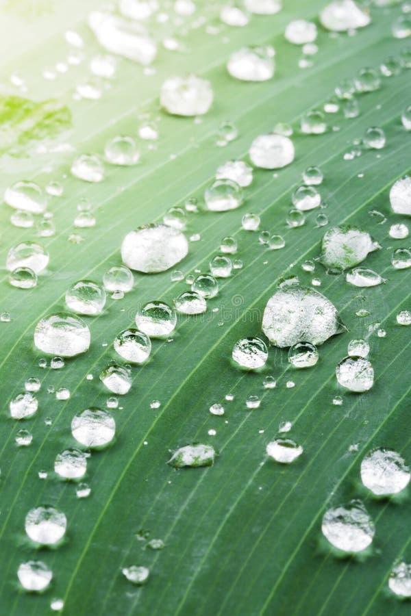 зеленые raindrops листьев стоковые фото