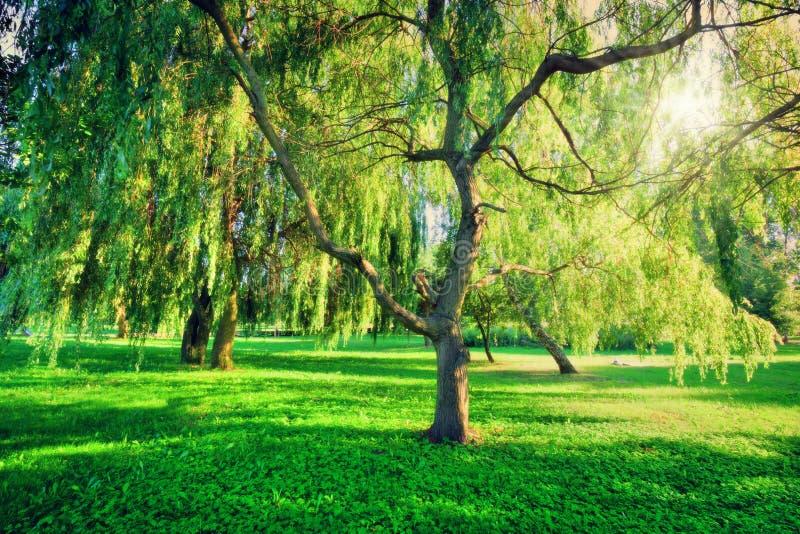 Зеленый ландшафт парка лета Тема природы стоковое изображение