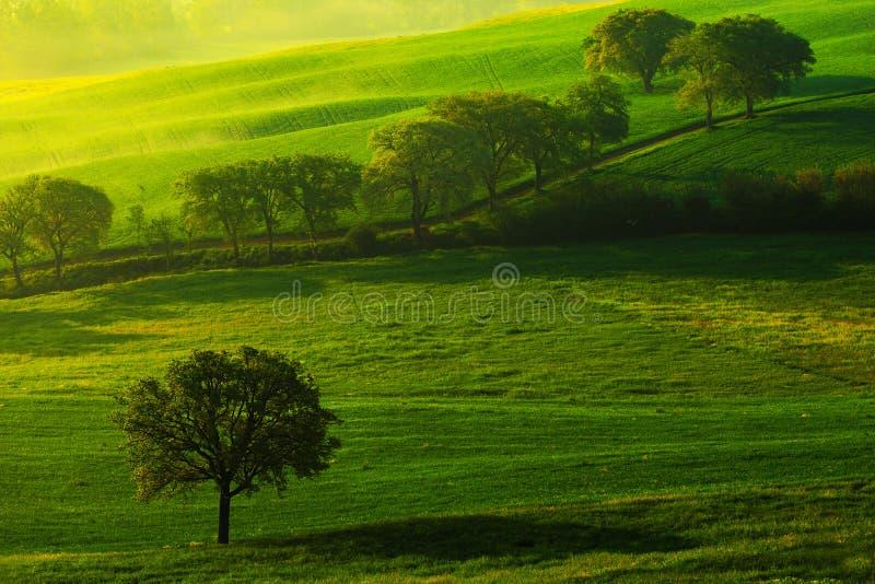 Зеленый ландшафт луга лета Лето в полях Идилличный взгляд холмистой обрабатываемой земли в Тоскане в красивом свете утра, Италии стоковое фото