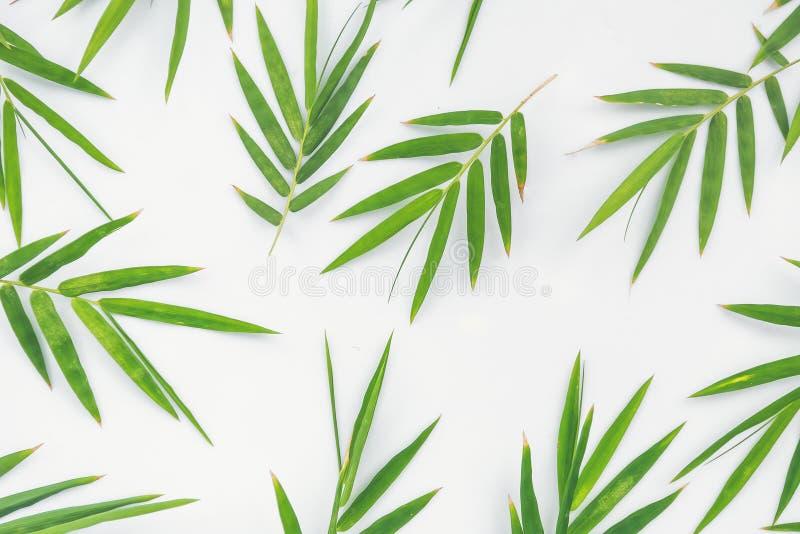 Зеленый бамбук выходит текстура стоковое фото