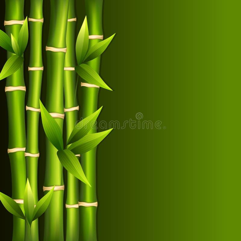 Зеленый бамбук иллюстрация штока