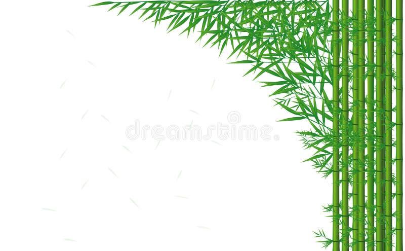 Зеленый бамбук бесплатная иллюстрация