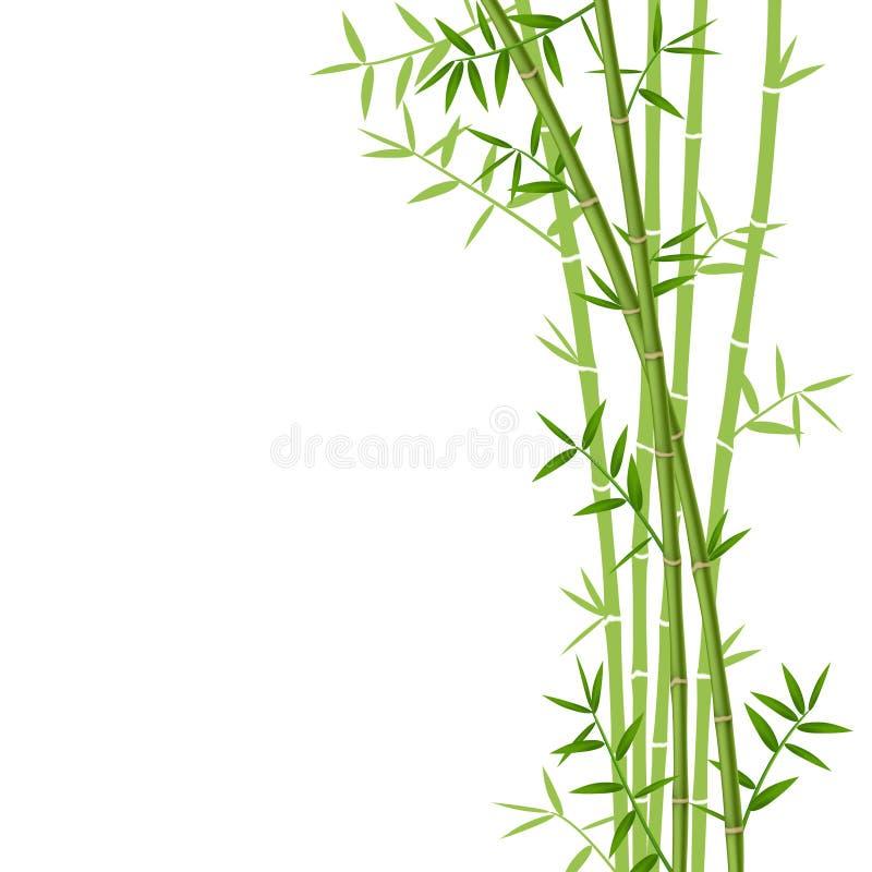 Зеленый бамбук иллюстрация вектора