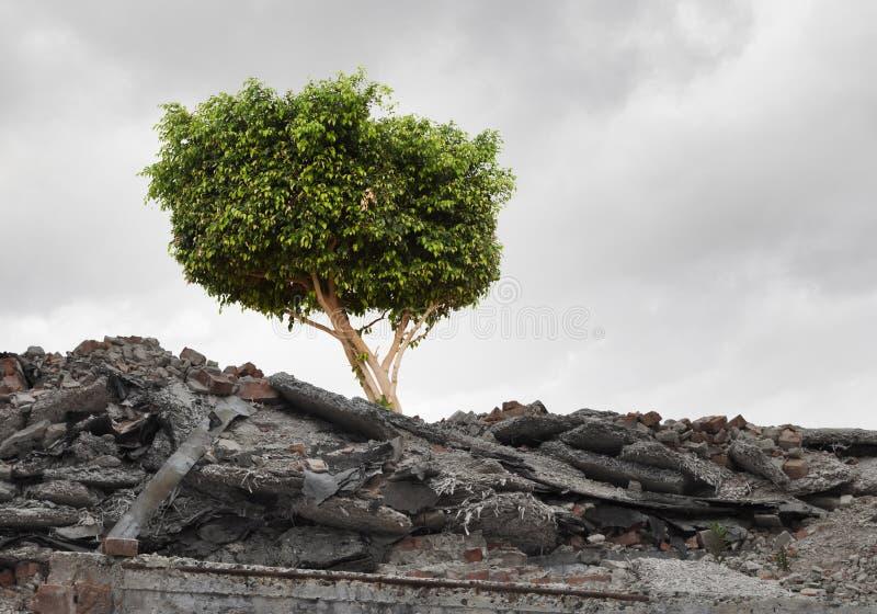 Download зеленый вал стоковое фото. изображение насчитывающей засохлость - 41650086