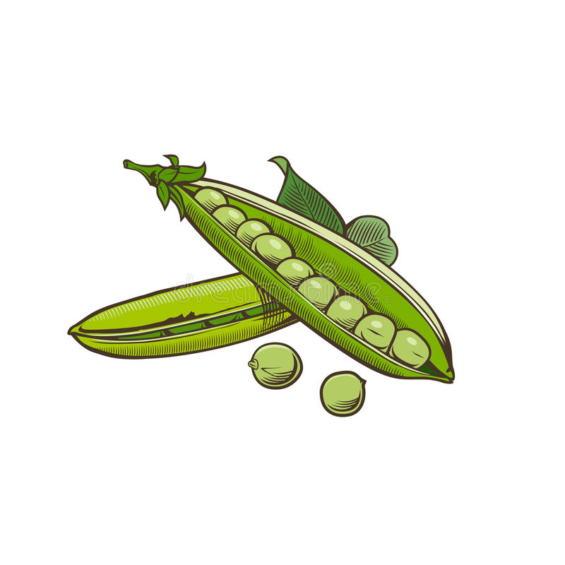 Зеленый горох в винтажном стиле бесплатная иллюстрация