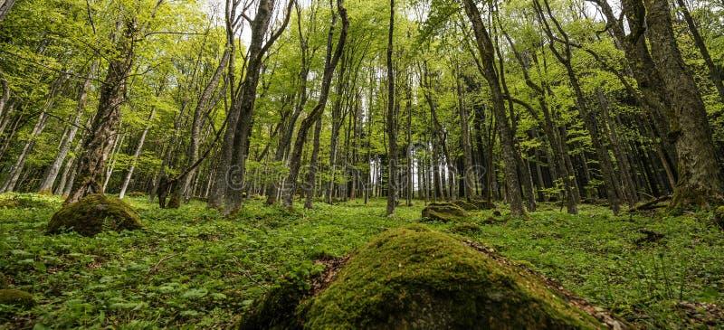Download Зеленый лес весны в лучах солнца Стоковое Изображение - изображение насчитывающей ярк, крона: 40581131