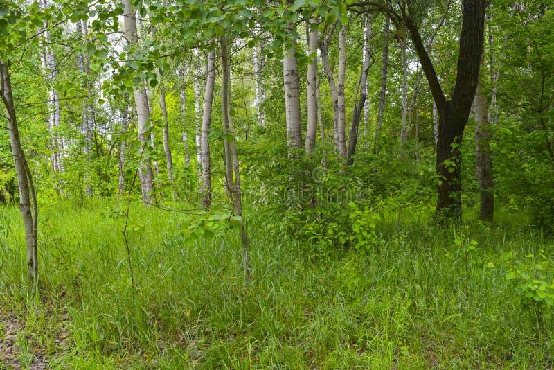 Зеленый лес весны в лучах солнца стоковое фото