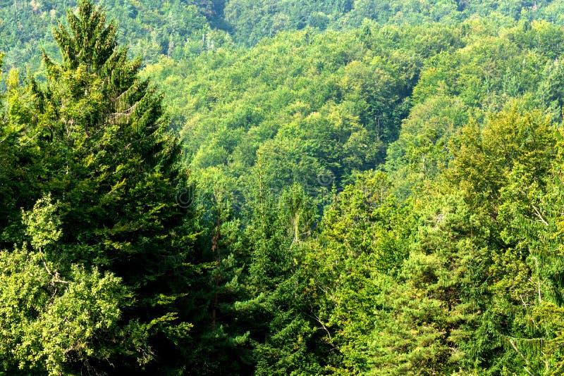 Зеленый лес дерева стоковые фотографии rf